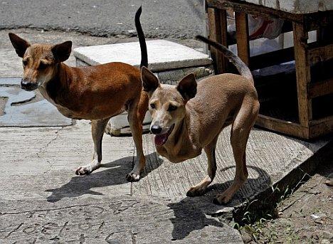 Hunde-Kängurus