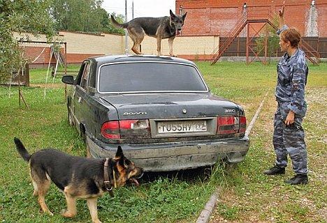 Hundestaffel Moskau