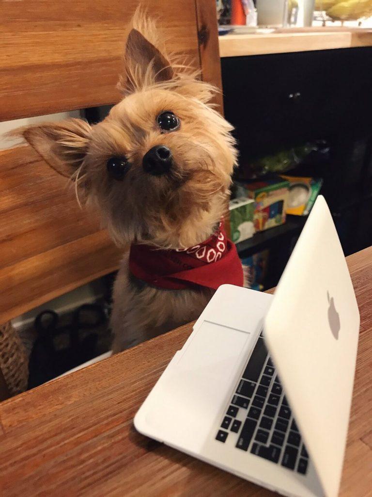 Laptop für den Hund