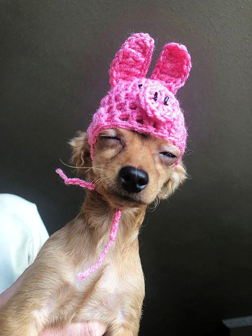 Häkelmütze für den Hund
