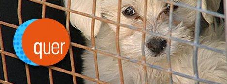 quer TV-Bericht: Hunde-Welpen aus dem Kofferraum