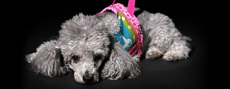 Berlin: Singlebörse für Hunde