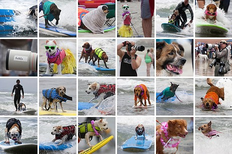 Coronado Bay Resort Surf Dog Competition