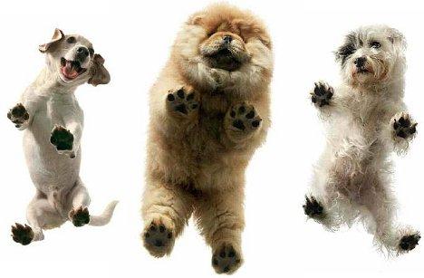 Tim Flach: Hunde. Ein Bildband